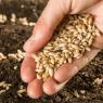 36336-vente-semences-anciennes-jardiniers-amateurs-bientot-reautorisee
