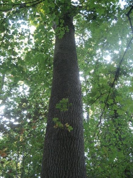 Cette image a un attribut alt vide; le nom du fichier est contes-a-petits-pas-2018-arbre.jpg